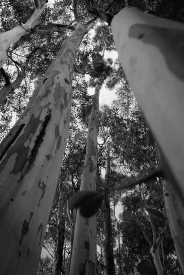Tall Timber by Maree Toogood