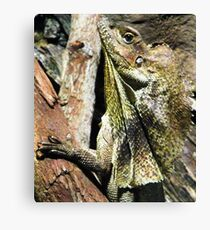 Camouflage at its best Canvas Print