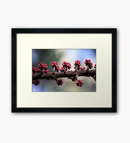 Young Buds in April Framed Print