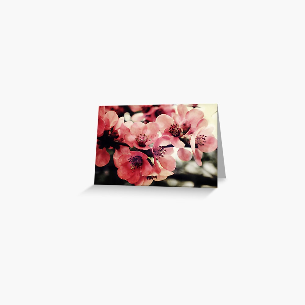 Japanese Quince - Single Branch Greeting Card