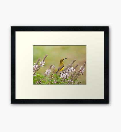 Bird in the Basil Framed Print
