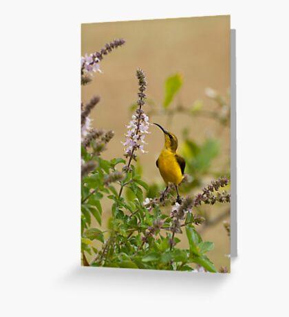 Sunbird in the basil Greeting Card