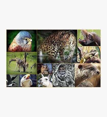 Wildlife Photographic Print