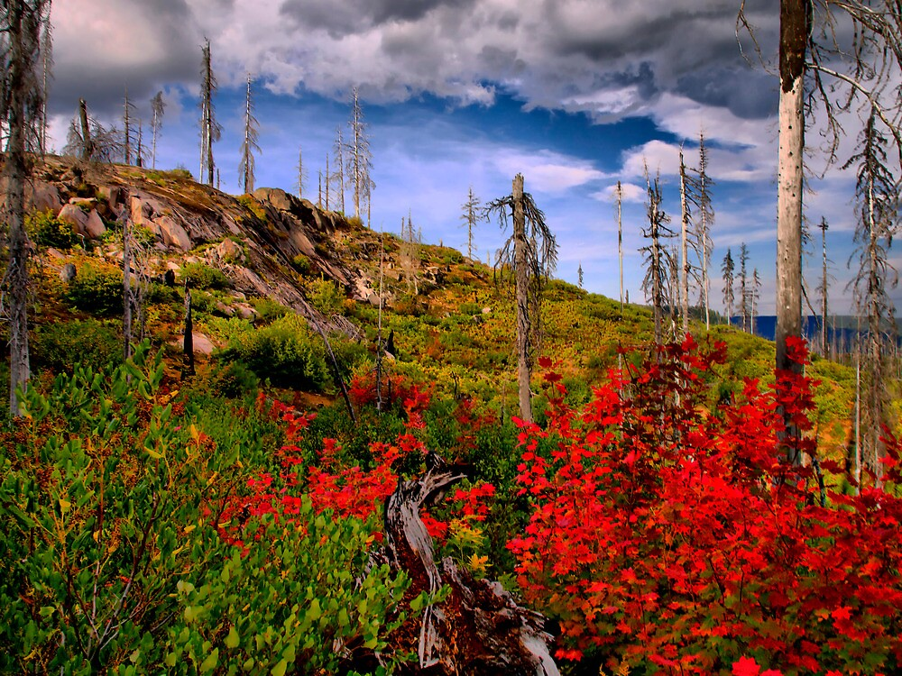Oregon Fall by Charles & Patricia   Harkins ~ Picture Oregon