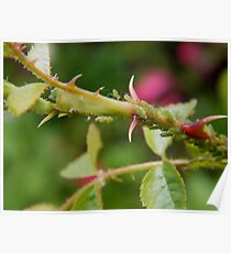 Greenfly Poster