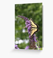 Summer Wings - Eastern Tiger Swallowtail Greeting Card