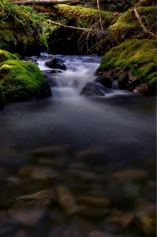 The Other Goat Creek by TeresaB