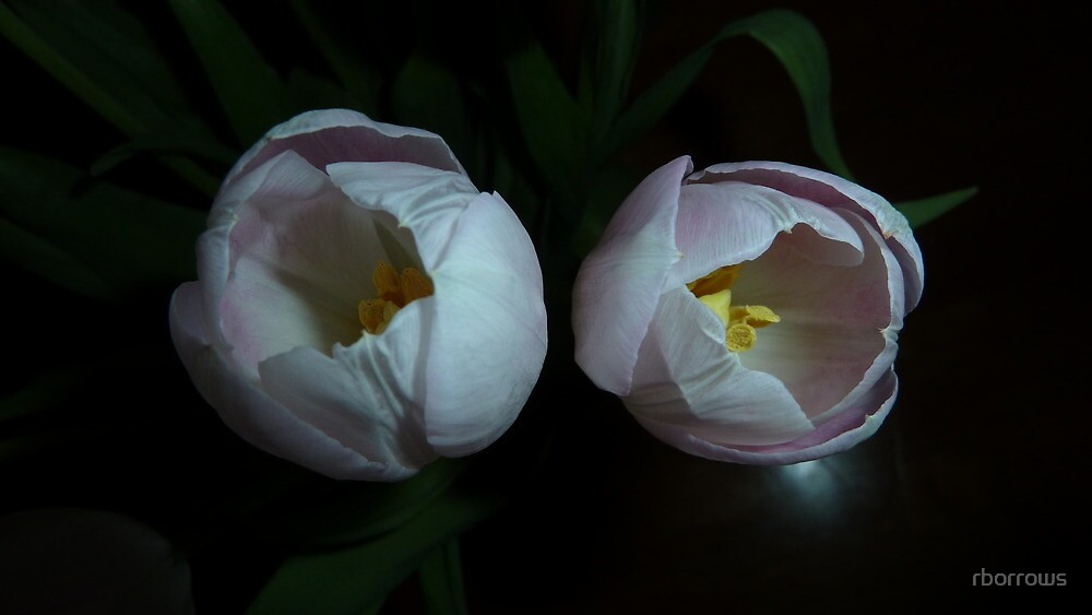 Pair of Tulips by rborrows