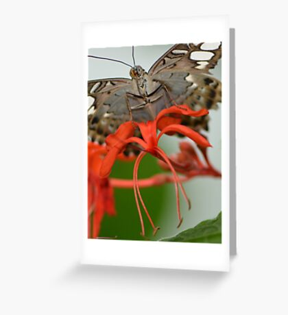 Underside of a Clipper Butterfly Greeting Card