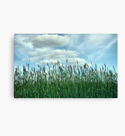 Looking to the Skies and See Canvas Print