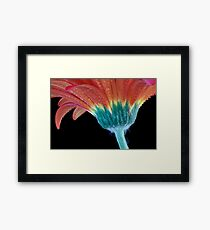 Dewy Petals - Detail from Red Gerbera Framed Print