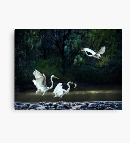 lunching at the weir Canvas Print
