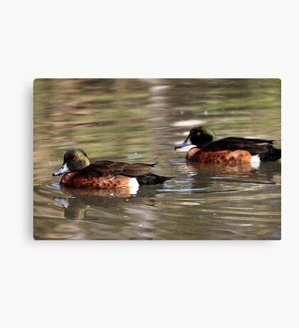 Two Brown Ducks Canvas Print
