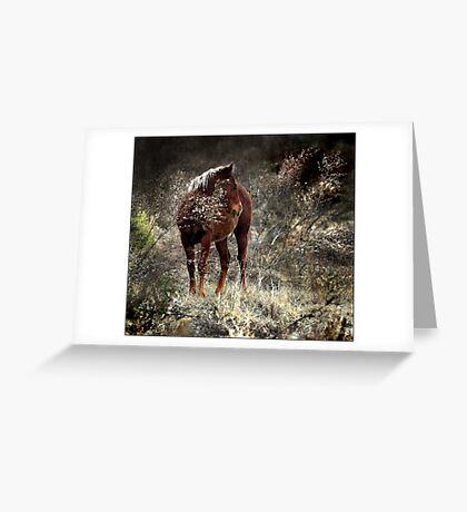 wild pony and shy Greeting Card