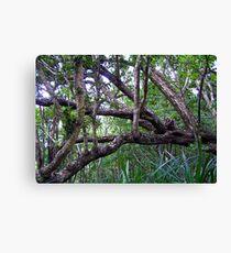 Rainforest, Margaret Knoll Leinwanddruck