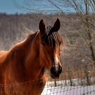 Such A Beauty by Monica M. Scanlan