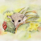Western Pygmy Possum by bushpalette