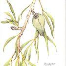 Australian Woody Pear by bushpalette