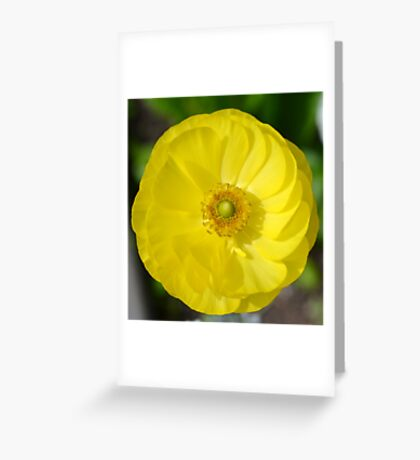 Pretty Yellow Flower Greeting Card