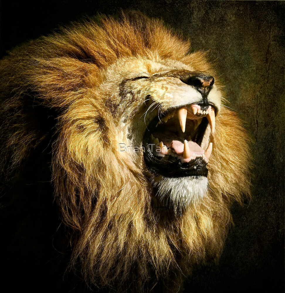 Quot The Lion S Roar Quot By Brian Tarr Redbubble