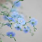 Hint of Blue by Linda Trine