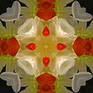 KALEIDOSCOPE 1 by Aurora Pintore