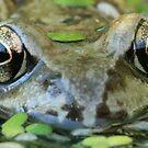 Frog by cornishgirlie