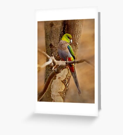 """""""Little Red Capped Parrot"""" Greeting Card"""