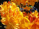 Vivid Vibrant Rhododendron Flowers Botanical art prints by BasleeArtPrints
