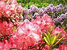 Rhododendron Gardens art prints Pink Purple Rhodies by BasleeArtPrints