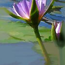 morning Lilly by Louise Linossi Telfer
