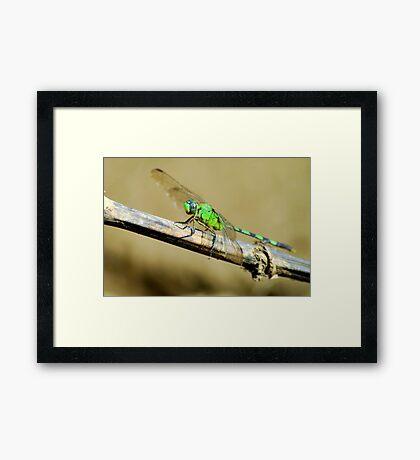 River Dragon - Brazil Framed Print