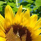 Sunlit Yellow SunFlower art prints Colorful Baslee Troutman by BasleeArtPrints