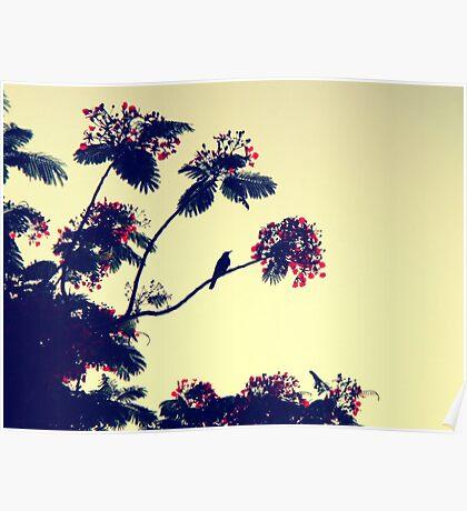 Bird heaven - St. Maarten Poster
