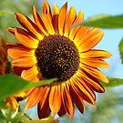 Orange Sunflower Floral Garden art prints Baslee Troutman by BasleeArtPrints