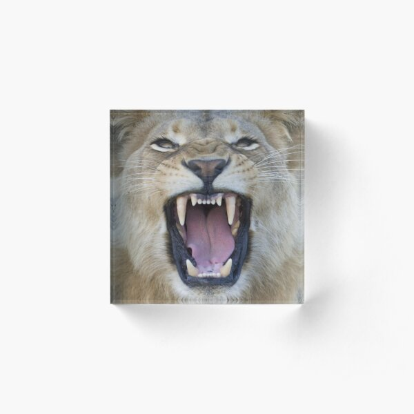 The Lions Mouth Opens Acrylic Block