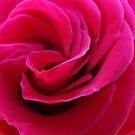 Rose Flower Spiral Pink Floral Roses art prints Baslee by BasleeArtPrints