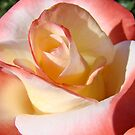 Romantic Rose Creamy Pastel Pink White Roses by BasleeArtPrints