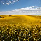 Field of dreams by Steve Biederman