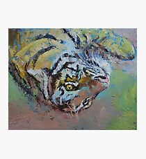 Tiger Play Photographic Print