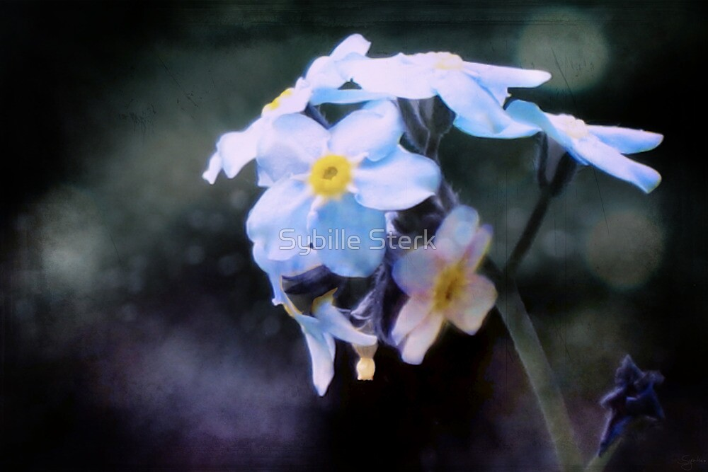 Summer: Forget-Me-Not by Sybille Sterk