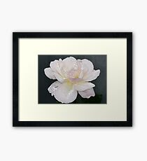 Rose Sparkles Framed Print