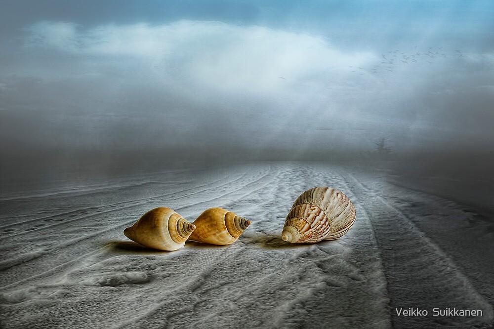 Foggy Beach by Veikko  Suikkanen