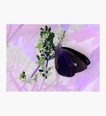 Large White on Lavender Photographic Print