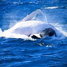 Whale of a Time by Kym Howard