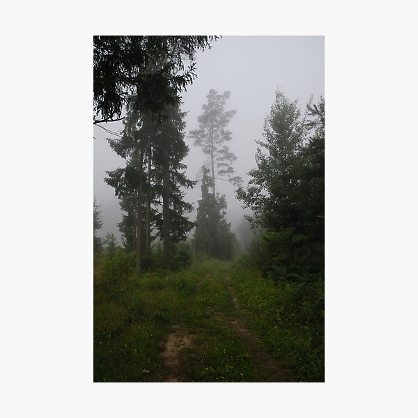 Forest pathway in fog Photographic Print