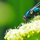 Blue Bottle & Parsley Flower by Nick  Gill