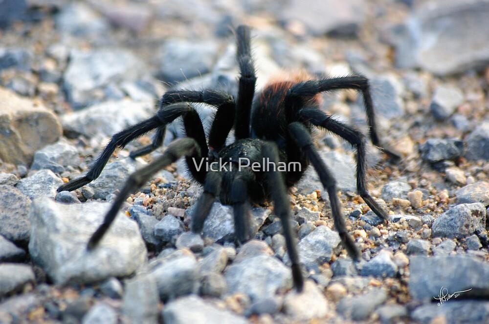 Tarantula  by Vicki Pelham