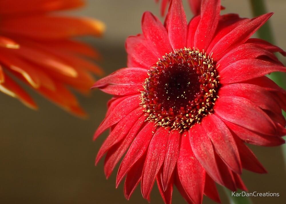 Spring Bloom by KarDanCreations