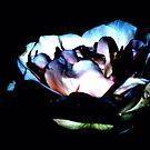 Illuminated Rose by beast